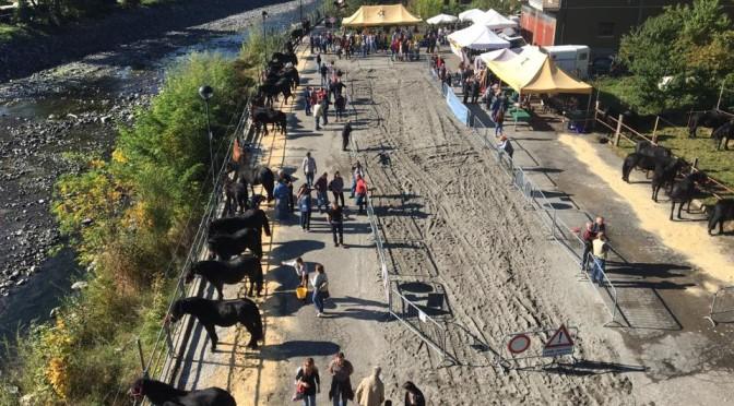 Fiera dei cavalli e dei bovini a Ferriere – 12 & 13 Ottobre